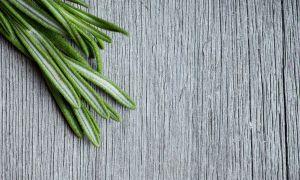 Rosemary: The Gut Biome Balancer