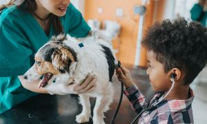 Can You Catch the Flu from Your Dog?