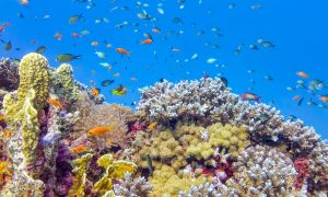 Ask Oz and Roizen: High Insulin Prices and Sunscreen Damage to Coral Reefs