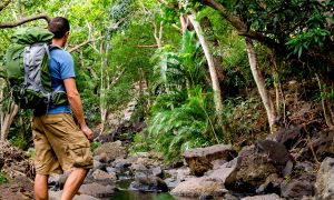 Hawaii Health Alert: 5 Surprising Ways Nature Can Improve Your Health