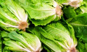 E. coli Outbreak Linked to Romaine Lettuce (Again)