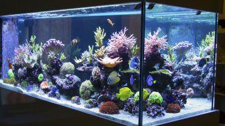 Avoid Red Tide in Your Home Aquarium