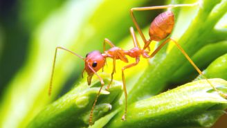 The Do's and Don'ts of Avoiding the Fire Ant
