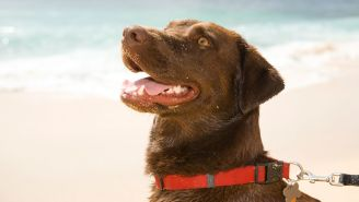 4 Ways to Prepare Your Pets for Hawaii's Next Emergency