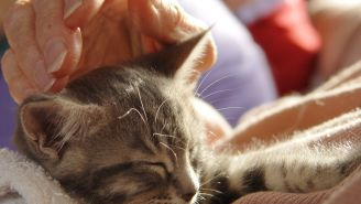 Harnessing the Healing Power of Pets