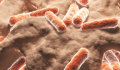 C. Diff: Can You Get Infected at Your Doctor's Office?