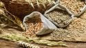 4 Great Grain Recipes for a Younger You