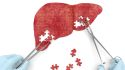 7 Amazing Facts About Your Liver