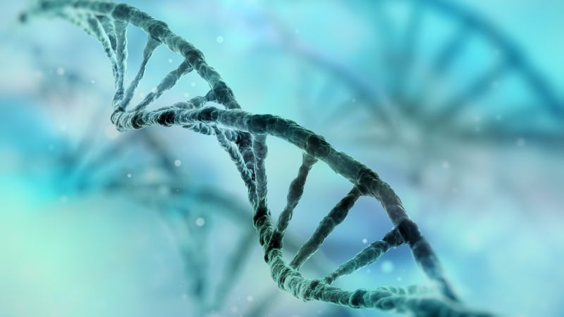 The Power of Epigenetic Changes to Remake Future Generations