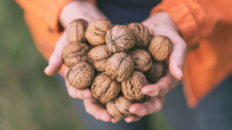 Go Nuts to Boost Your Cognitive Health