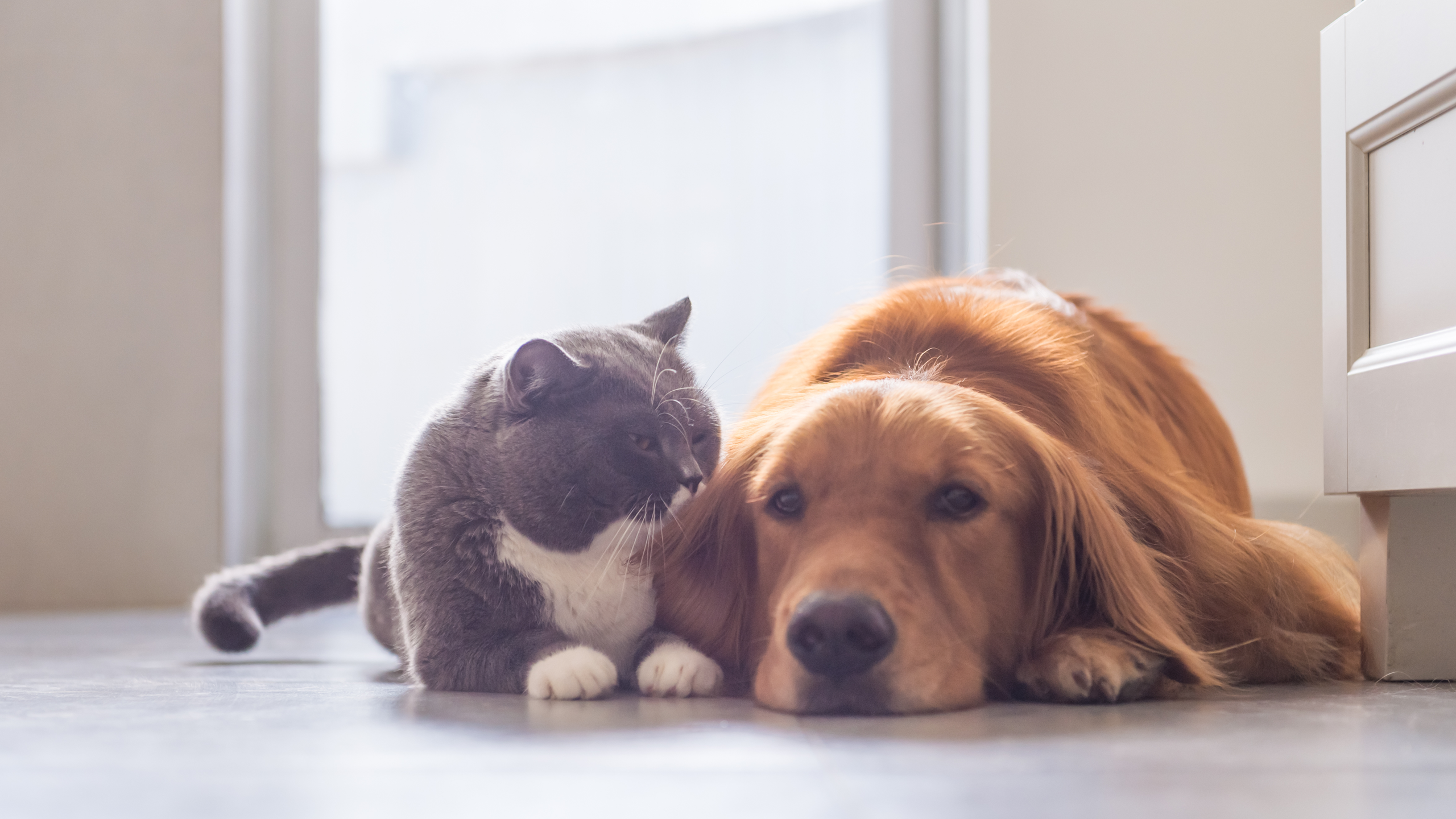 8 Diseases You Can Catch From Your Pet—and Some You Definitely Can't
