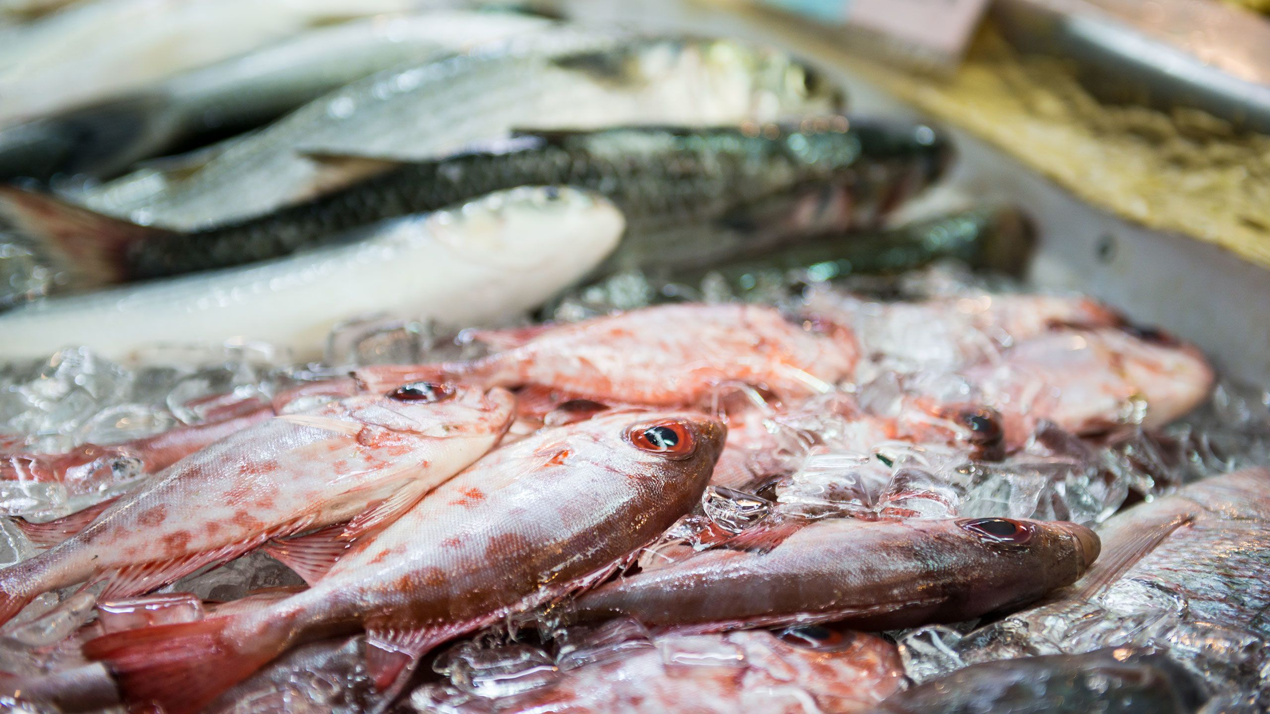 Hawaii Health Alert Should You Be Worried About Mercury In Fish Sharecare