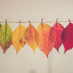 Turning over a new leaf - Recommend, Represent, Recover. - news article image