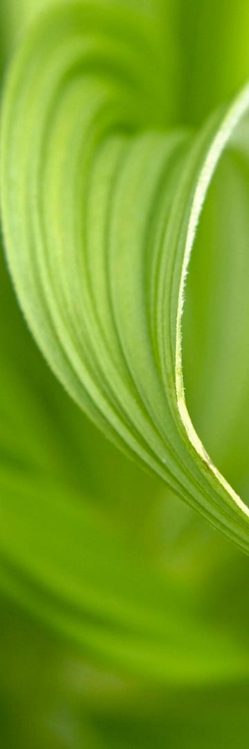 Green leaf unfurling - The Climate Changes for ESG