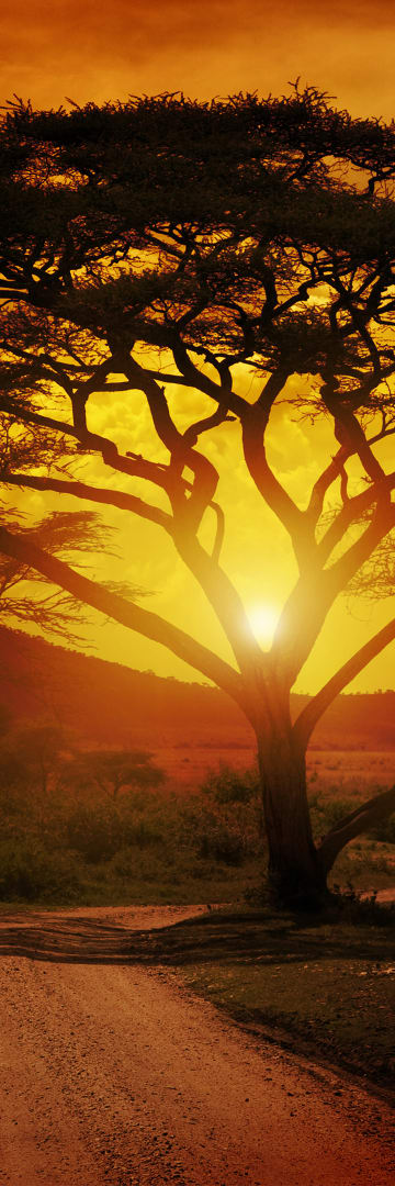 Africa Region, tree in sunset