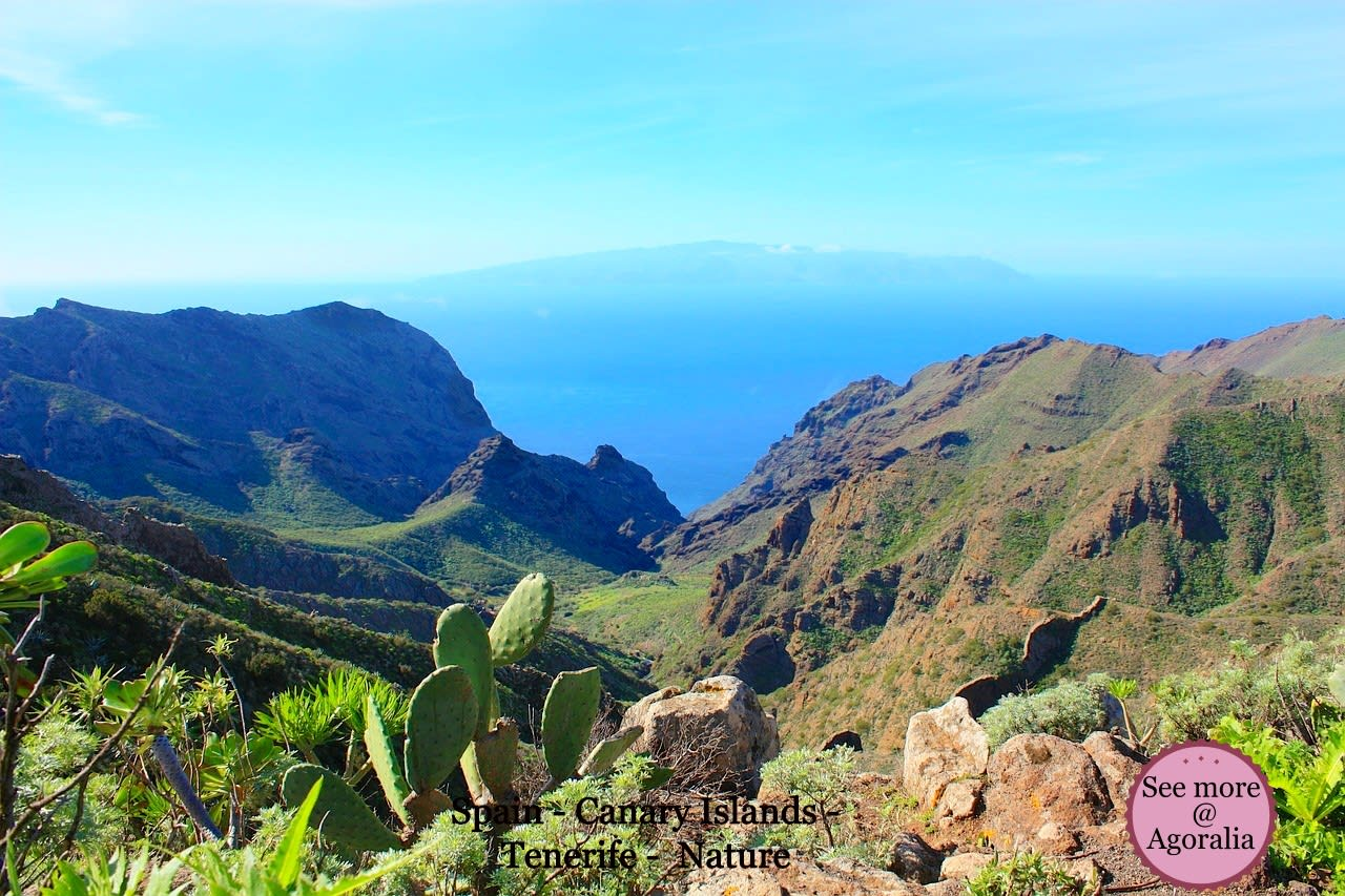 Spain - Canary Islands - Tenerife - Nature