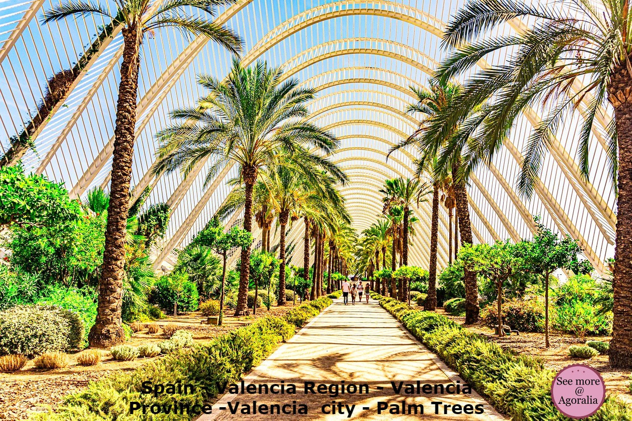 Spain-Valencia-Region-Valencia-Province-Valencia-city-Palm-Trees
