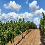 Spain-La-Rioja-Region-Vineyard
