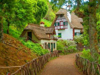 Portugal Madeira Region Forrest Thatch