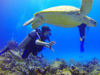 Mexico-Diver-Sea-Turtle