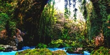Greece Epirus Region Ivy Bridge