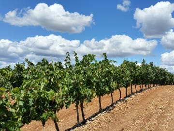Spain-La-Rioja-Region-Vineyard