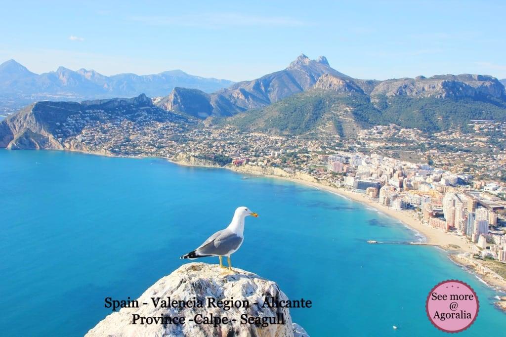 Spain-Valencia-Region-Alicante-Province-Calpe-Seagull