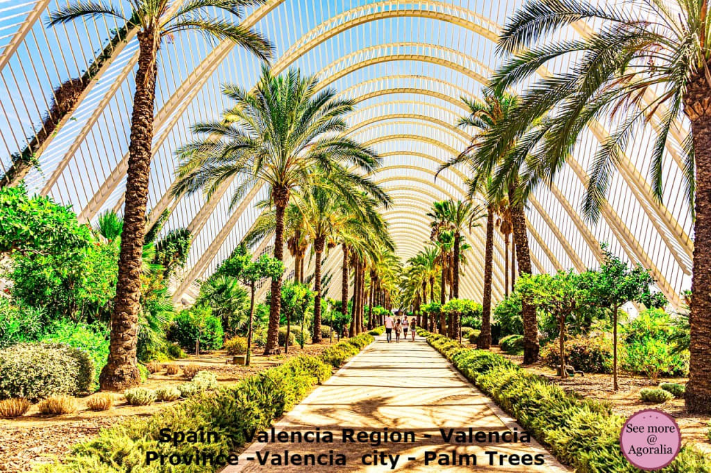 Spain-Valencia-Region-Valencia-Province-Valencia-city-Palm-Trees