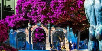 Spain - Canary Islands - Santa Cruz - Fountain