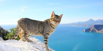 Spain-Valencia-Region-Alicante-Province-Calpe-Cat