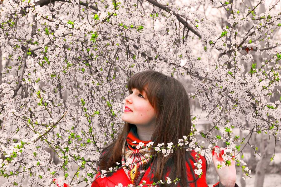 Japan-Cherry-Blossom-and-a-person