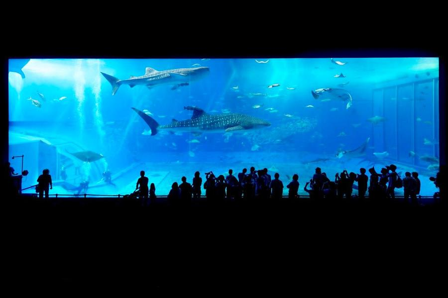 Japan-Okinawa-Churaumi-Aquarium