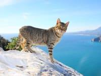 Spain-Valencia-Region-Alicante-Province-Calpe-Cat