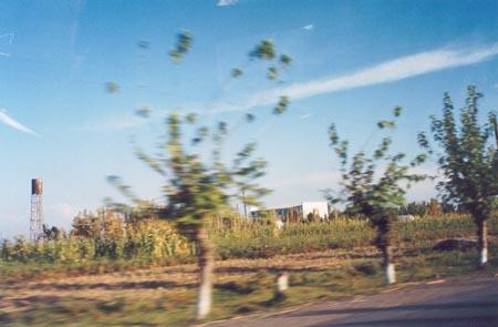 Cotton fields outside of Andijan, Uzbekstan.