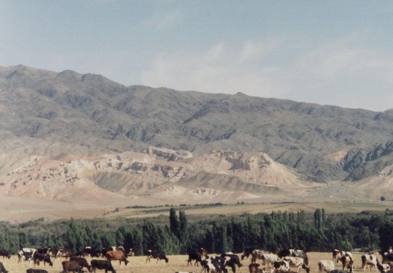 Kyrgyz horses and the Alatoo Mountains - Talas, Kyrgyzstan.