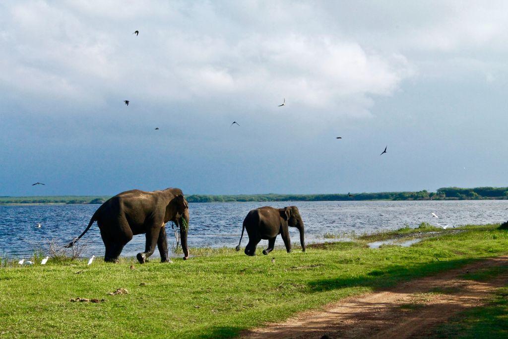 Tissamaharama, Sri Lanka