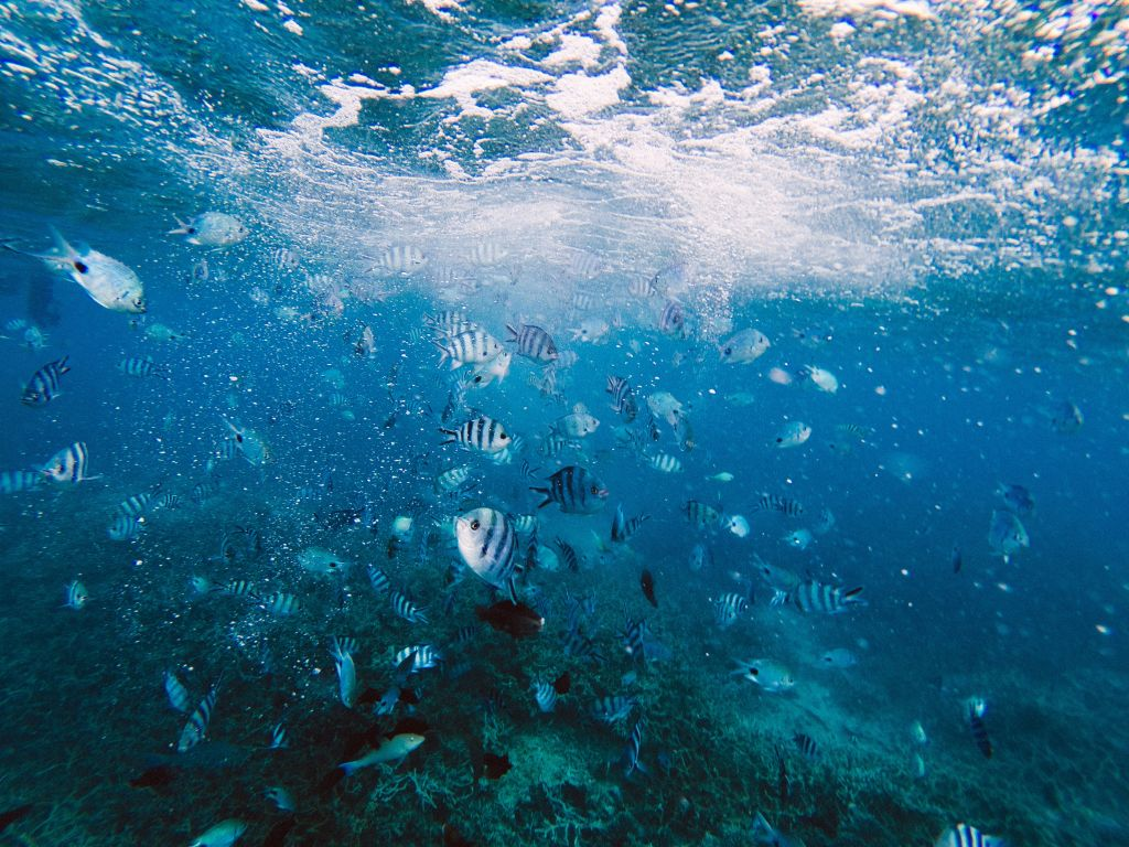 Blue Bay Marine Park, Blue Bay, Mauritius