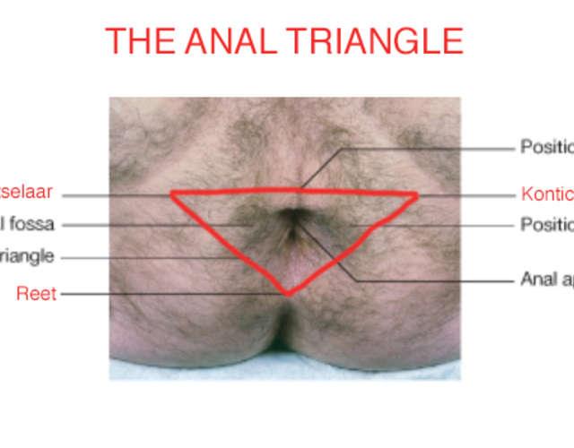 Tache g femelle anale
