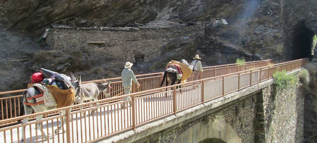 Lightweight Trekking with Donkeys and Mules in the Sierra Nevada