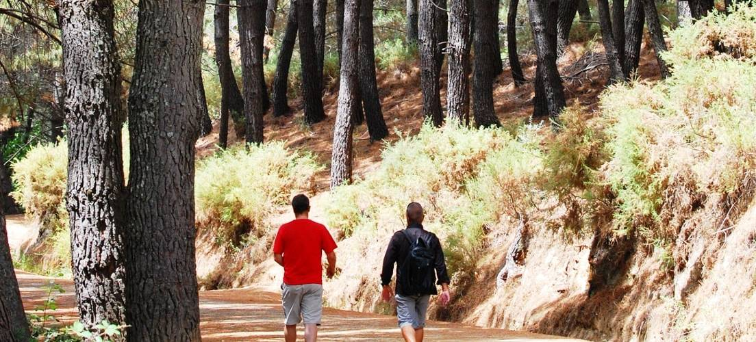 Walking Sierra de las Nieves Forests
