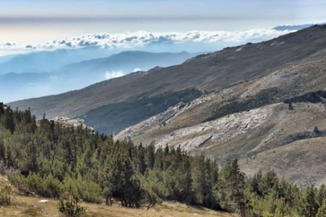 High forests of the Alpujarras