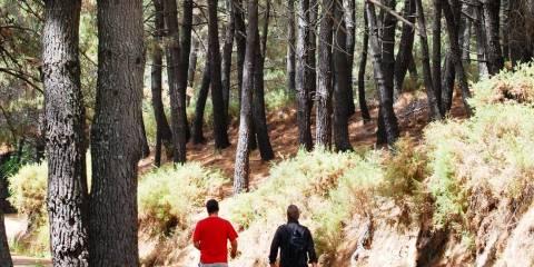 Walking Sierra de las Nieves Forests