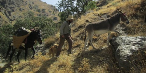 Multiple Donkeys are part of the Trip
