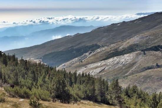 Alpujarra Forests