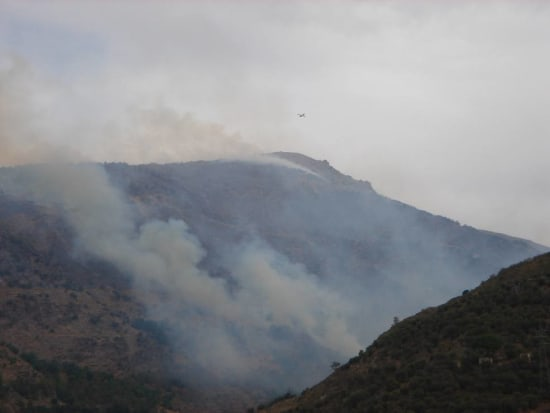 Reforesting area of Sierra Nevada burnt by fire 2005