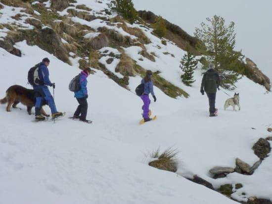 Snowshoeing in the forests of the Alpujarras