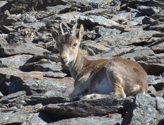 The wildlife is much less timid around Laguna de la Mosca