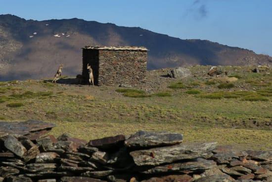 Spring is in the air! Cabra Monteses at La Campiñuela refuge