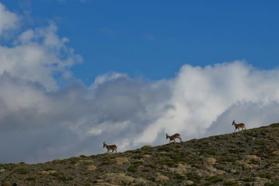 Cabra Monteses, Tajos de Peñón Negro