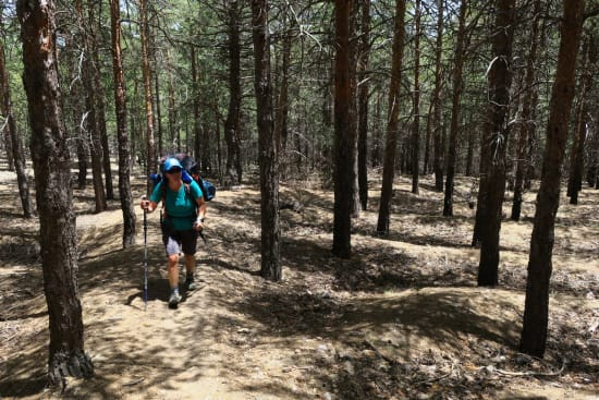 Day 1 - some great and easy to follow forest trails